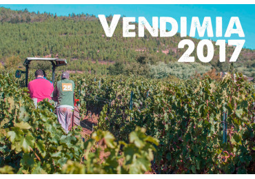 Se adelanta la vendimia 2017 en casi toda Galicia.